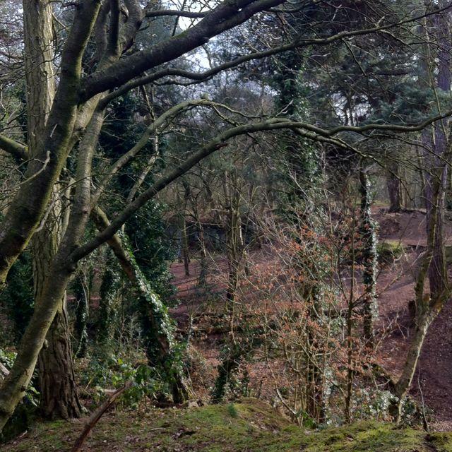 Ruff woods