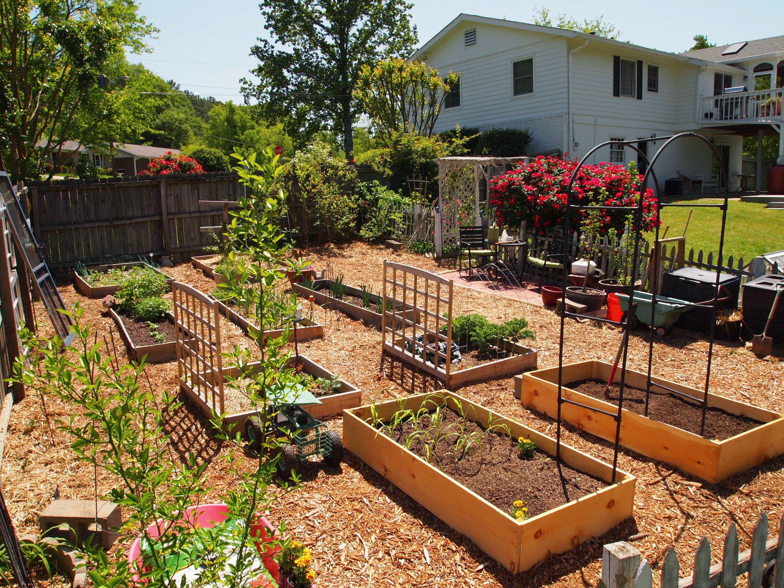 Backyard food garden ideas - What Will My Garden Grow Vegetable Garden Layoutsbackyard