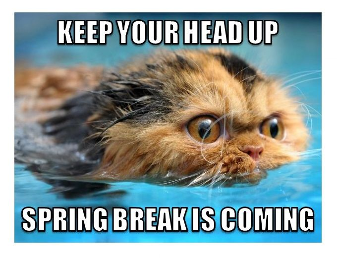 Last Day Of Classes Before Spring Break Teacher Humor Teacher Memes Teaching Humor
