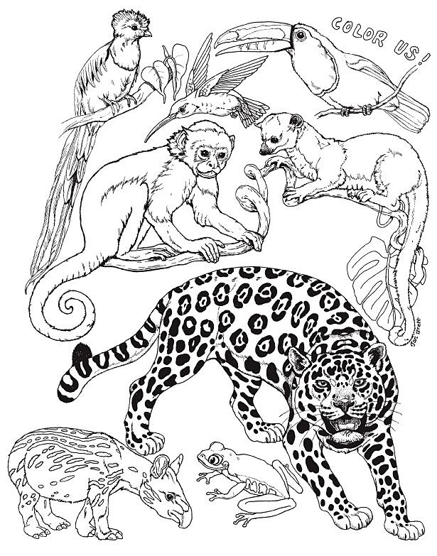 Beautiful All About The Umbrella Coloring Page Best For Kids -   - best of coloring pages to print animals