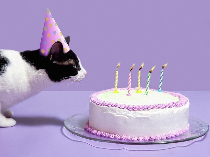 Pin By Yasmim Ramos On Cakes I Loved Pinterest Cats Cat