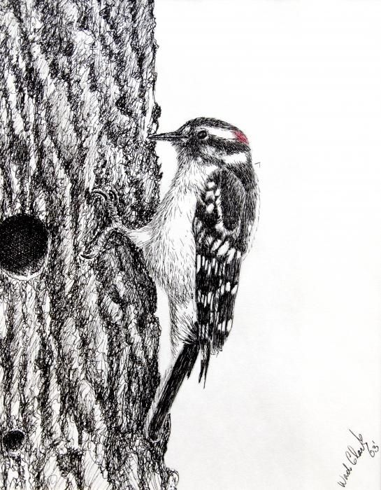 Downy Woodpecker Bird Art Downy Woodpecker Bird Sketch Bird Art