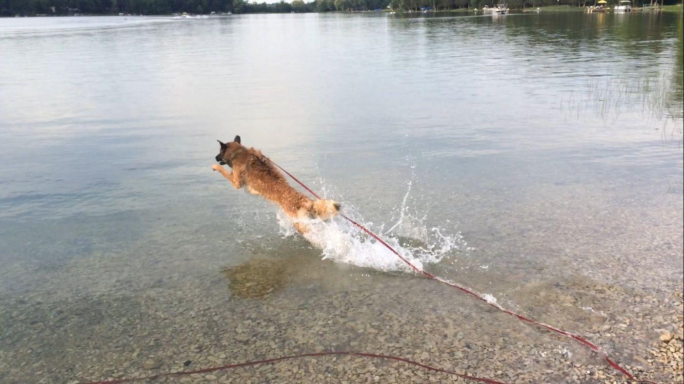 A él le gusta mucho nadar, así normalmente, durante los fines de semanas en el verano, Riser y Alexa van al lago para nadar.