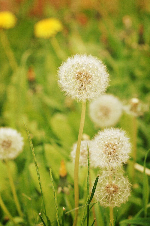 Il Fullxfull 146140392 Jpg 1000 1500 Pixels Flowers Pretty Flowers Lion Flower