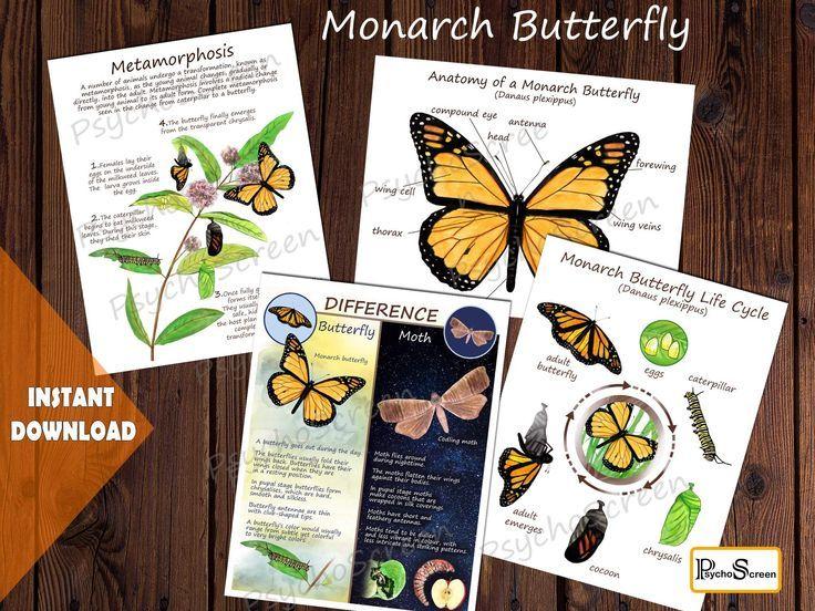 MONARCH BUTTERFLY Unit Study MEGA Printable butterfly