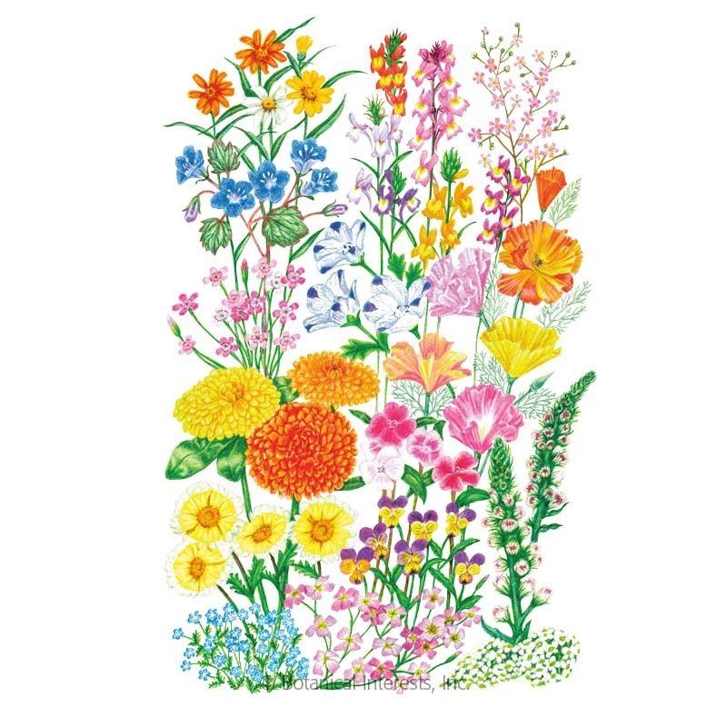 Bulb companions flower mix seed companion gardening