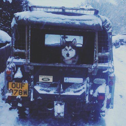 #defender #defender90 #defender110 #defenderitalia #heritage #defender_life_style #defender_for_ever #offroad #4x4 #landrover #landlovers #landroveritalia #searchandrescue #landroverdefender #picoftheday #defenderlove #td5 #td4 #ilovelandrover #leggenda #offroaditalia #offroadlife #extreme #dogs #puppy #beagle #lagotto #dogstagram #puppylove #defenderdogs by _defenderdogs_ #defender #defender90 #defender110 #defenderitalia #heritage #defender_life_style #defender_for_ever #offroad #4x4…
