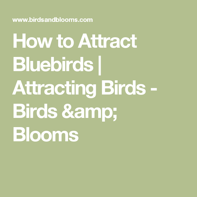 Wondering How To Attract Bluebirds To Your Backyard? Weu0027ll Show You How  With These Tips And Tricks From Our Experts.