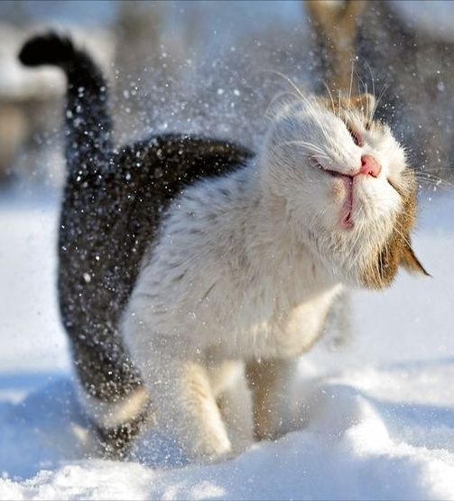 So Adorable Cat With Images Cute Animals Cute Cats Crazy Cats