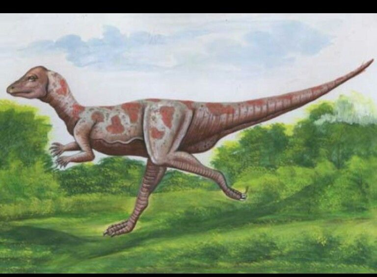 The Micropachycephalosaurus (meaning small thick headed ...