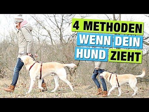 Warum Zieht Und Zerrt Ihr Hund An Der Leine Martin Rutter Frank Elstner Menschen Youtube Hunde Hundeerziehung Hunde Erziehen