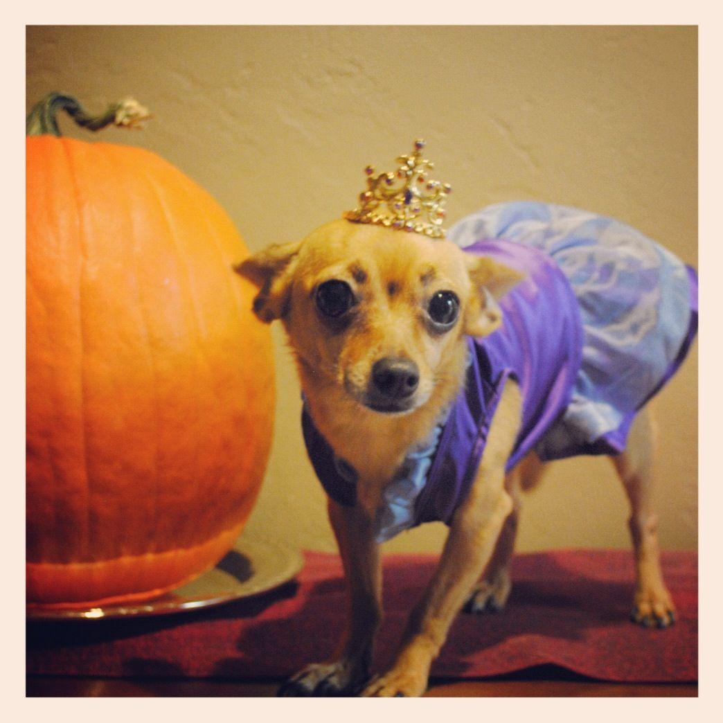 Princess dog costume | Pooch | Pinterest | Dog and Animal