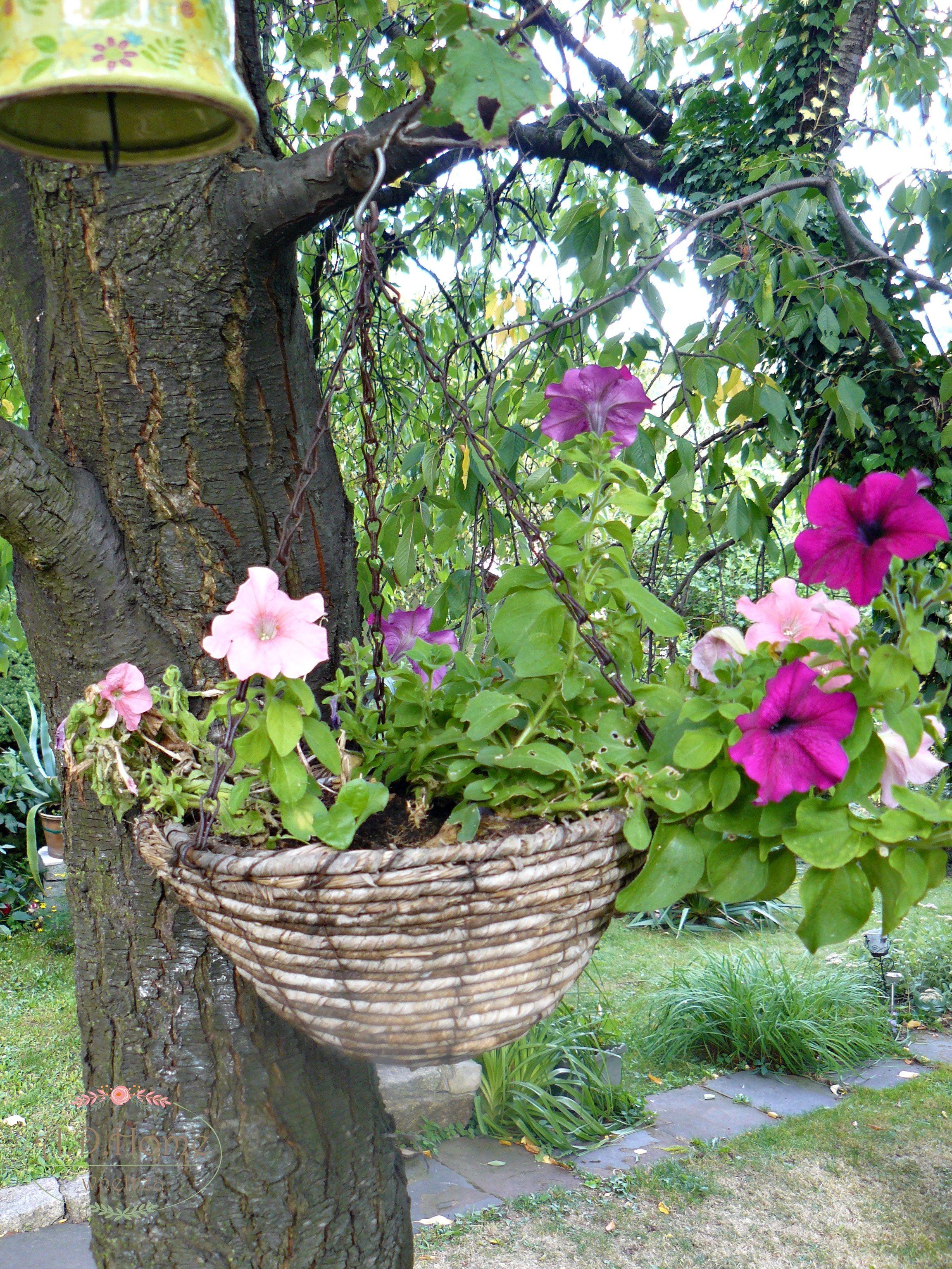 Ogrod Kwiaty Dekoracje Widoki Aranzacje