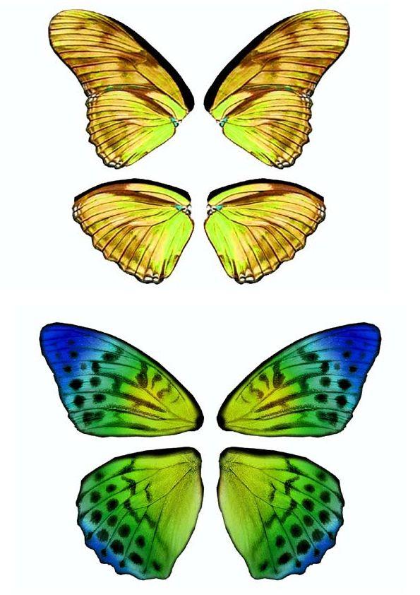 Dibujos y Plantillas para imprimir Alas mariposas para hadas