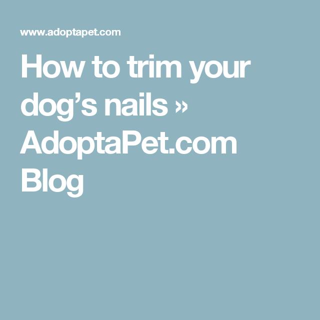 How to trim your dog's nails » AdoptaPet.com Blog