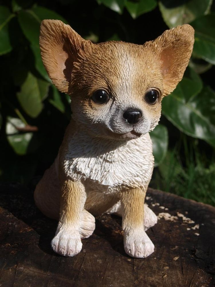 Chihuahua Lebensecht Welpe Sitzend Dekofigur Tierfigur Gartenfigur Neuheit Tiere Gartenfiguren Tierfiguren