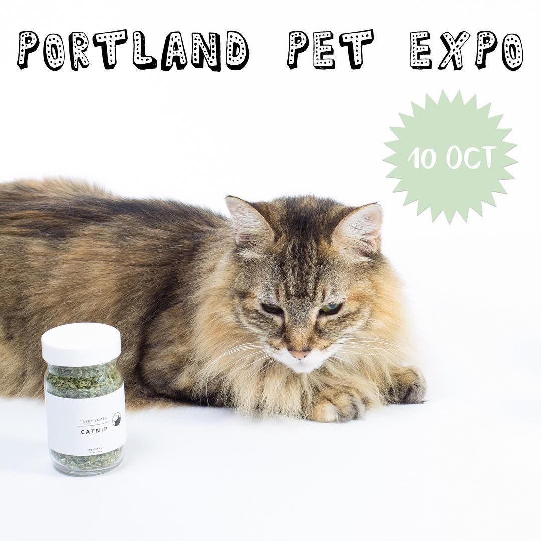 Hello friends! We will be heading down to Portland on 10/10 for the Pet Expo. Portland friends, will you be there?!  @tabbyjamesco