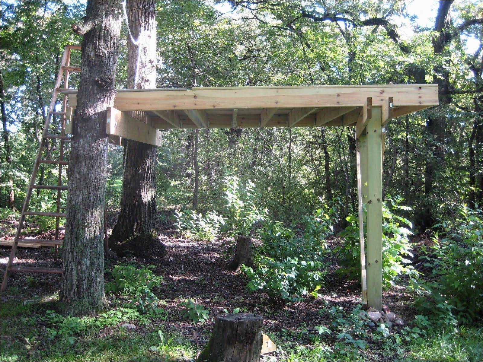Free Treehouse Plans Tree House You Can Live In About From Treehouse Platform Plans Source Twinyc Com Simple Tree House Tree House Diy Tree House Plans