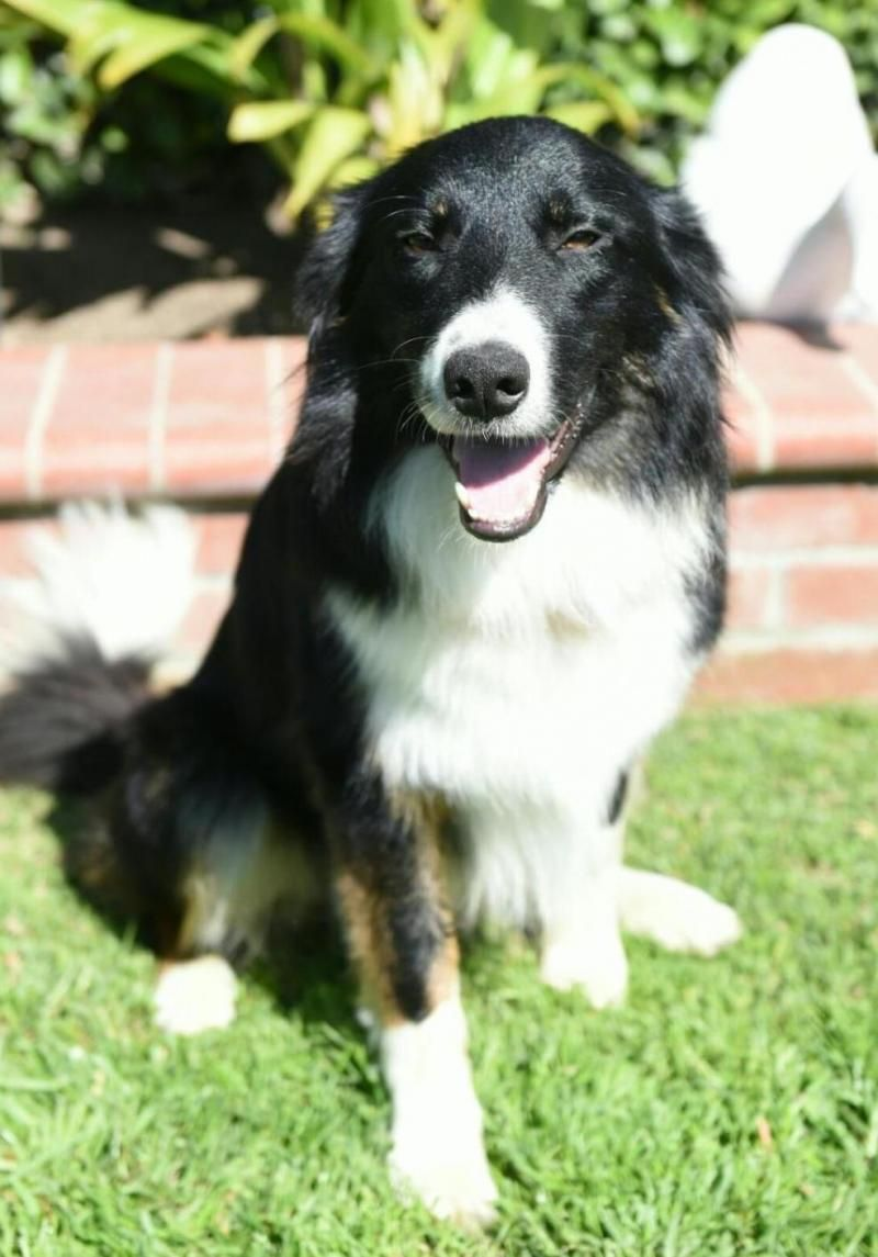 Adopt Rocky on Beautiful dogs, Rescue dogs, Animal rescue