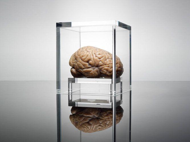 brain Adam Voorhes