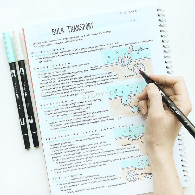 ˗ˏˋ pin honeeyjin ˎˊ˗ School organization notes, Study