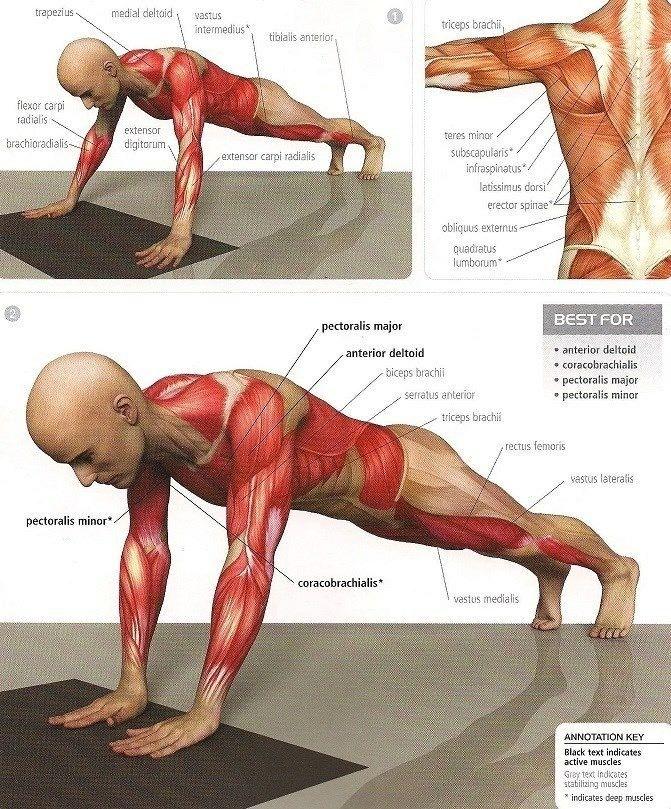 Qué músculos trabajo en cada ejercicio? En el siguiente artículo te ...