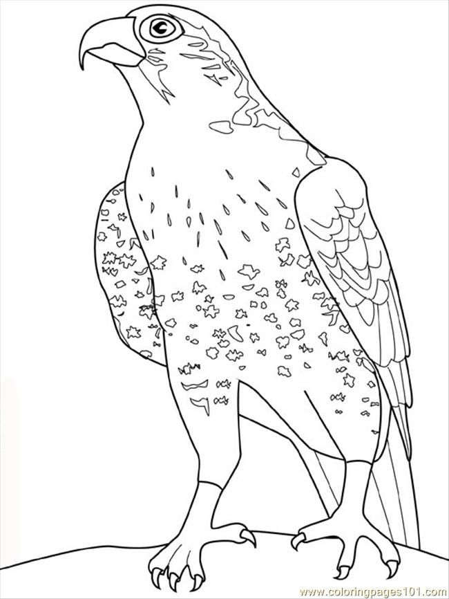 Falcon Bird Coloring Pages Coloring Pages Horse Coloring Pages