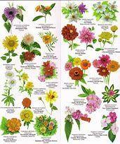 Namen Für Pflanzen