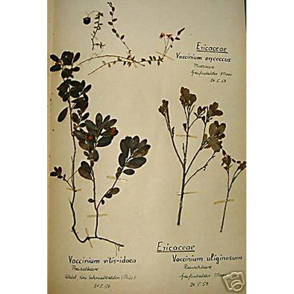 Set of 120 Pressed and Framed Botanical Specimens | From a unique collection of antique and modern decorative art at https://www.1stdibs.com/furniture/wall-decorations/decorative-art/