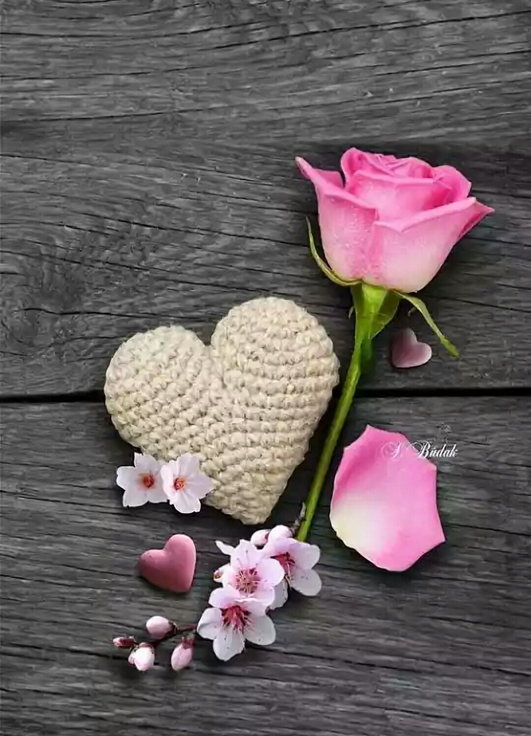 Pin by gnl krcaolu on kalp pinterest nice flower colour splash phone wallpapers wallpaper backgrounds nice flower beautiful flowers pretty in pink heart art valentine cards red roses izmirmasajfo Choice Image