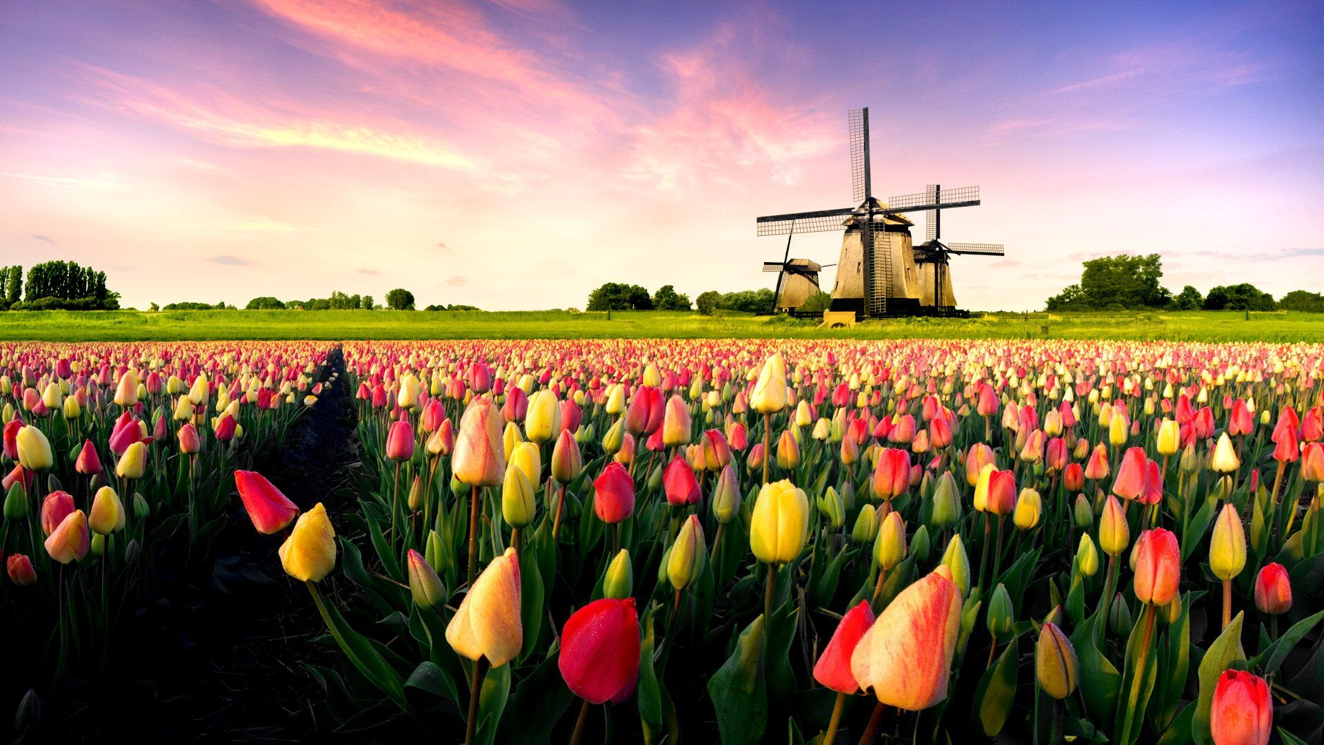 Lovely HD Windmill Wallpapers