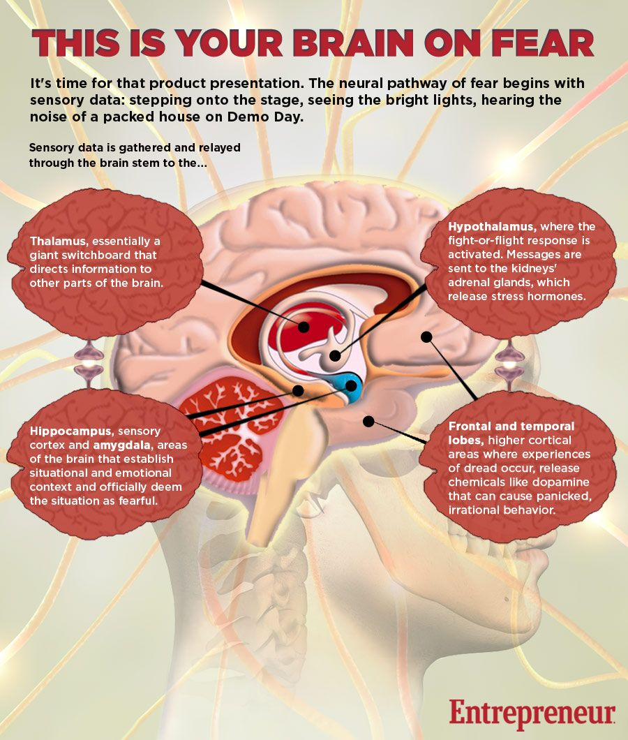 This Is Your Brain on Fear (Infographic)