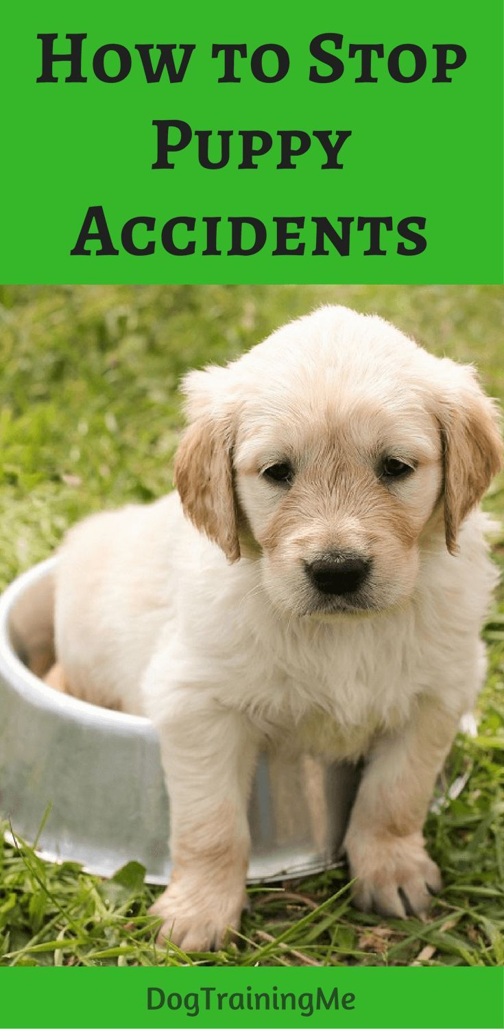 How To Stop Puppy Accidents Dog Training Easiest Dogs To Train