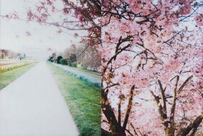 pretty blossom