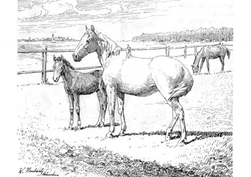 Free Printable Coloring Page With Realistic Horses