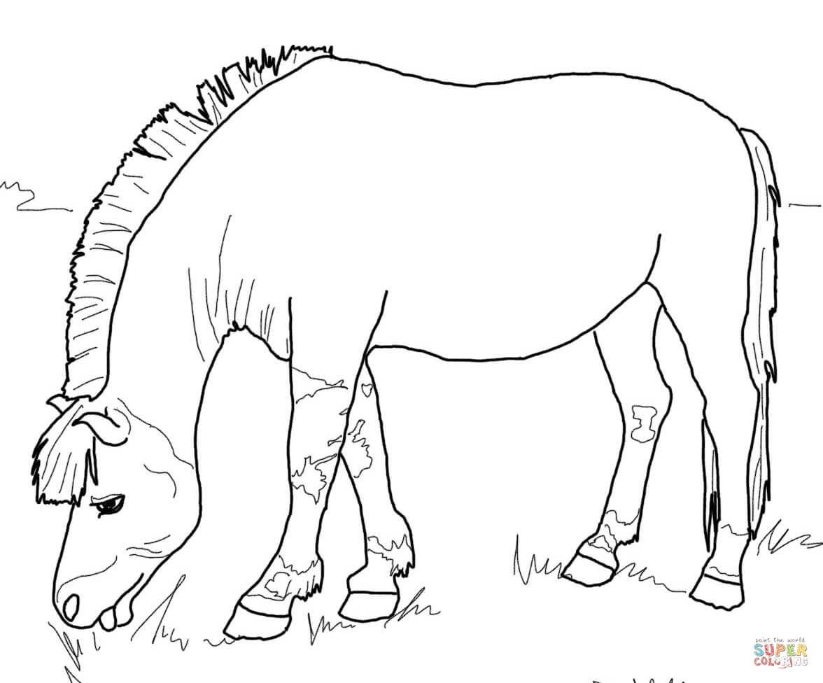 Norwegian Fjord Horse Coloring Pages Horse Coloring Pages Fjord Horse Horse Coloring [ 976 x 1176 Pixel ]