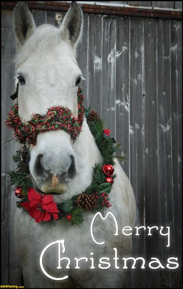 Merry Christmas Animals.Funny Christmas Animals Merry Christmas Domesticated Animals Funny