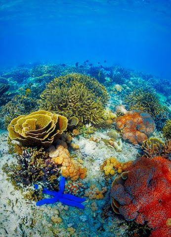 Seas Oceans Flora Fauna Community Google Photos De L Ocean Faune Et Flore Recif Corallien