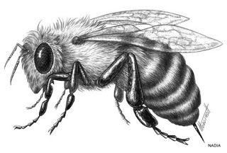 Cómo Pintar Animales Abeja Animales Para Pintar Dibujos De Animales Realistas Bosquejos De Animales