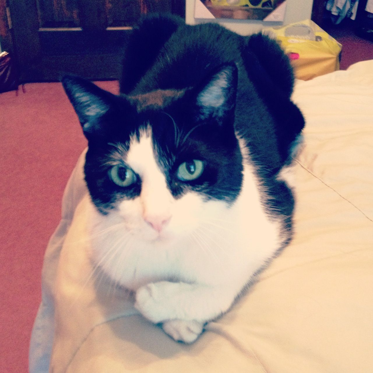 My polite cat #cat #sophisticated | Cats, Animals ...