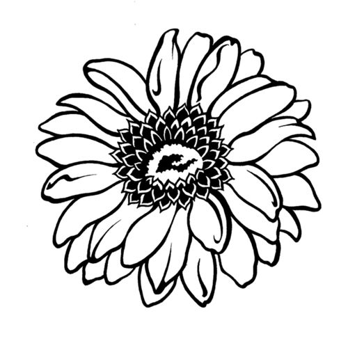 Gerbera Daisy Gerber Daisies Coloring Pages Flower Drawing