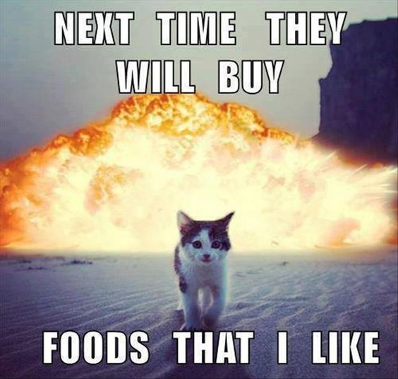 Funny Memes Clean Cats : Top clean humor quotes and th