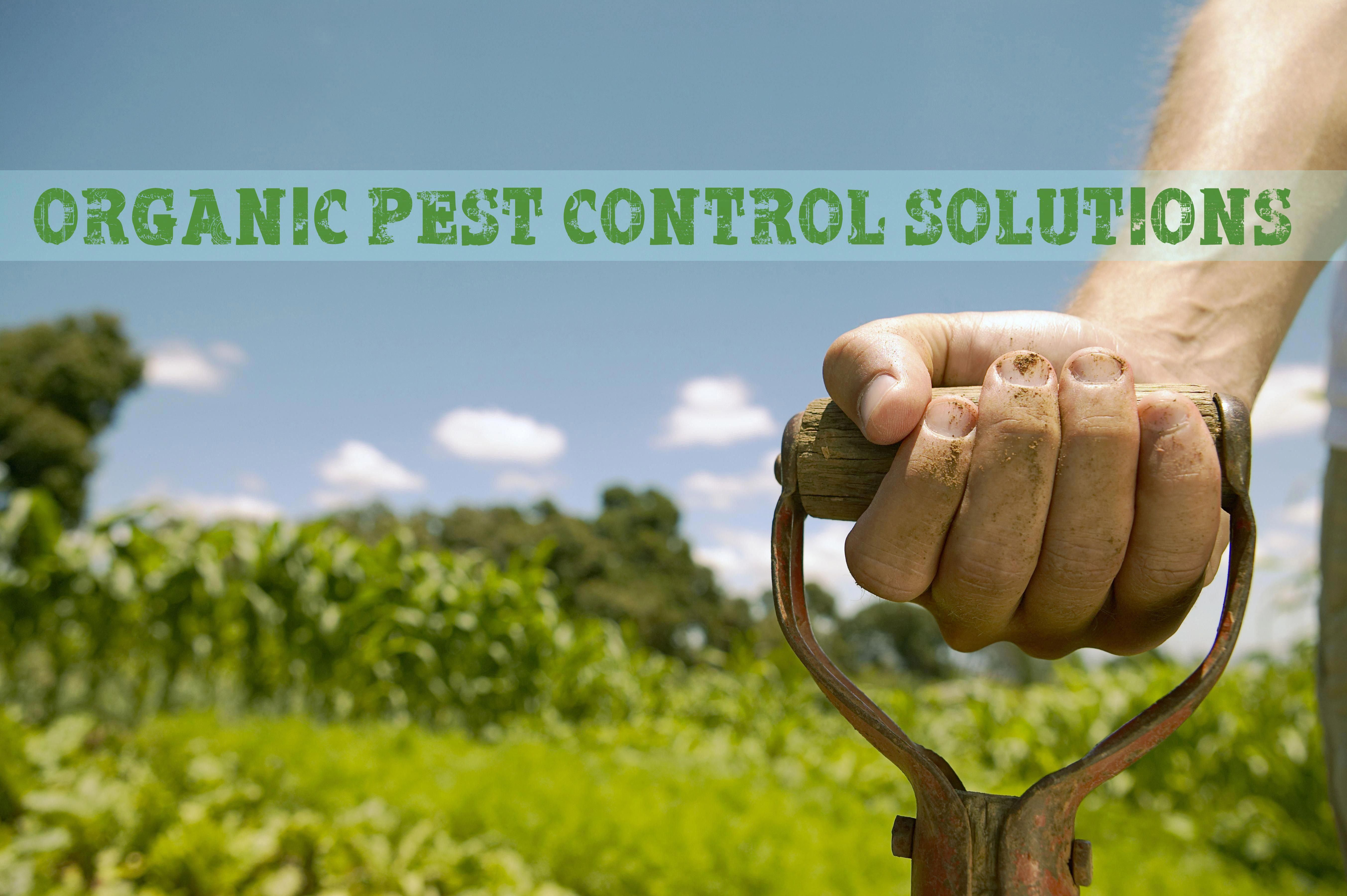 Prepper S Will Organic Pest Control Lemon Balm Keeps Rodents Away Tansy Keeps Ant Out Etc Pestcontrol In 2020 Organic Pest Control Organic Pest Termite Control