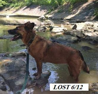 Lost Dog Cecil Venice Washington Co Lost Dog Between Venice Presbyterian Church And Grange Road Around 11 00 This Mornin Girl Dog Collars Losing A Dog Dogs