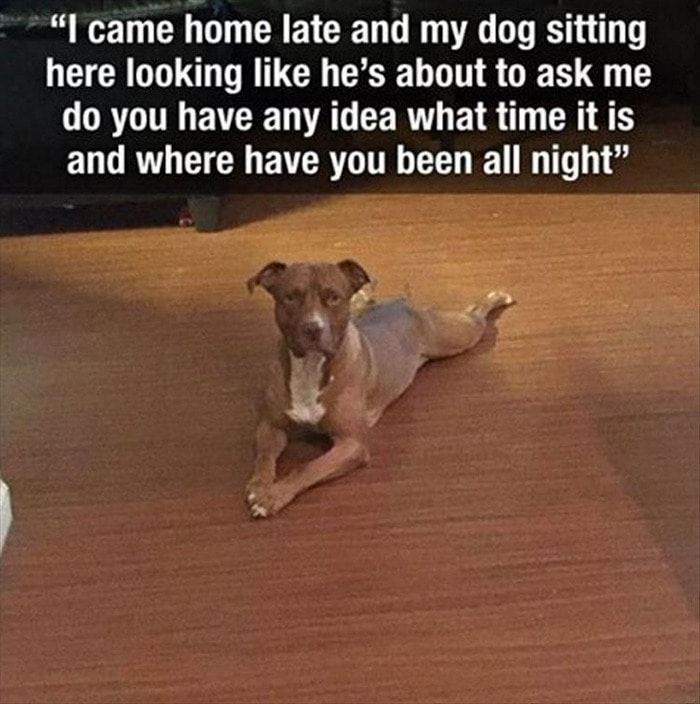 Funny Animal Pictures Of The Day Release 7 (100 Photos) #funnyanimalpictures