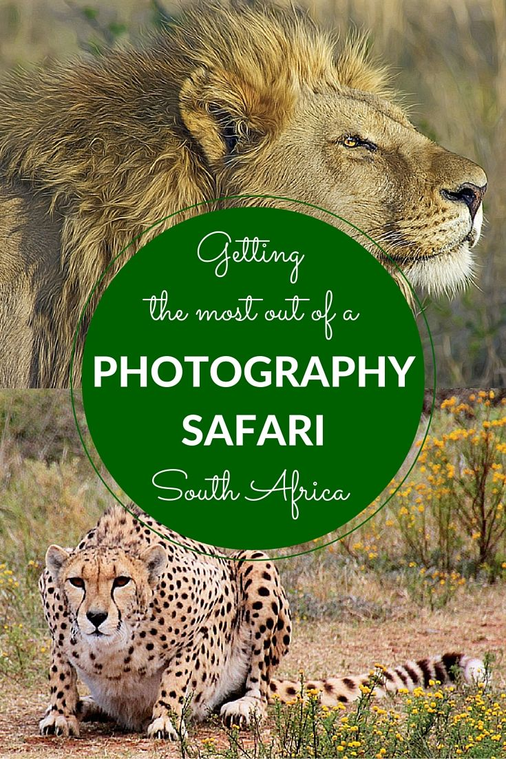 How to get the most out of a photography safari in South Africa