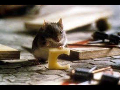 Um Ratinho Encrenqueiro Assistir Filme Completo Dublado