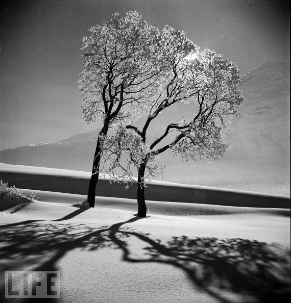 A tree I like