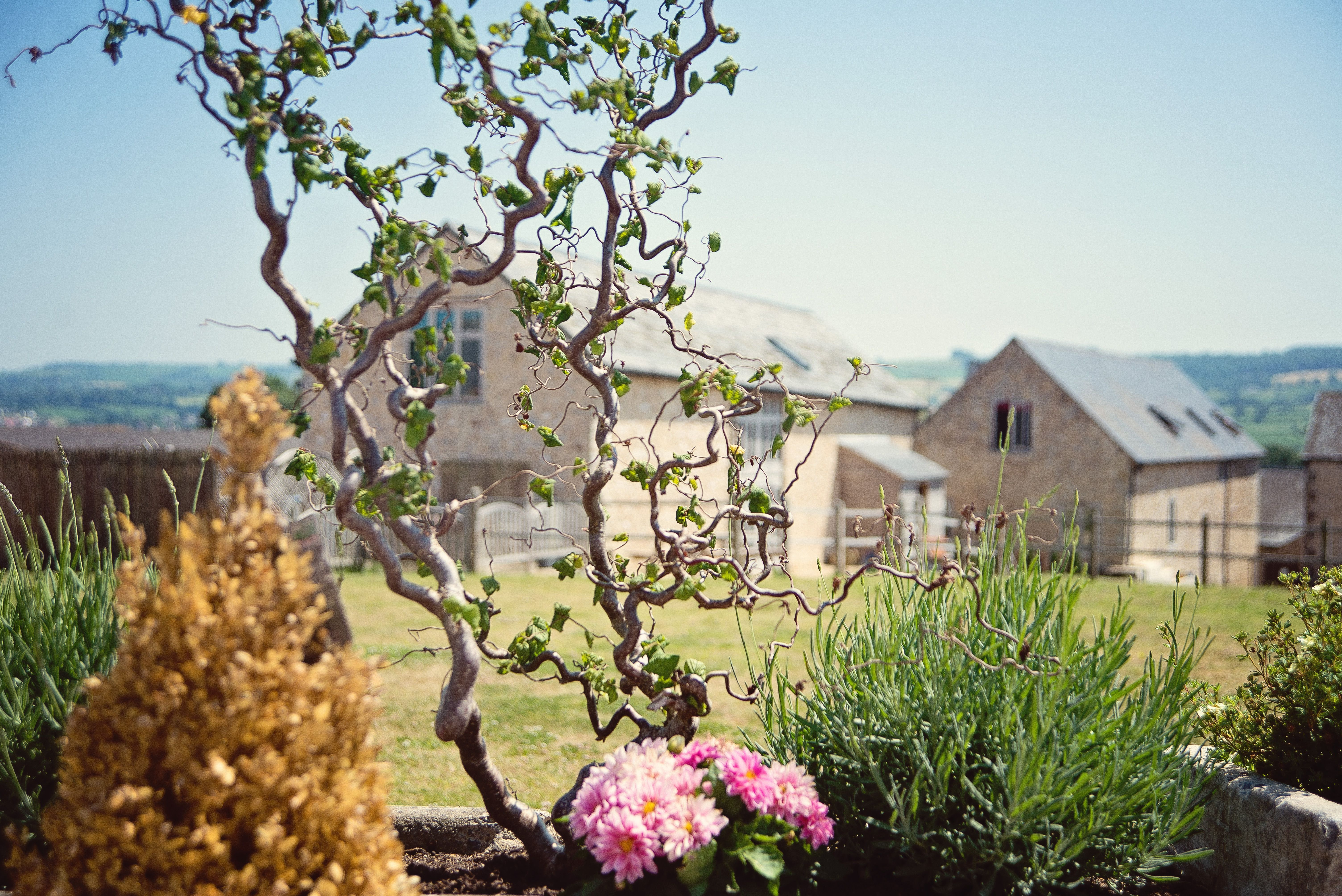 The garden view to the Milking parlour at Cranberries