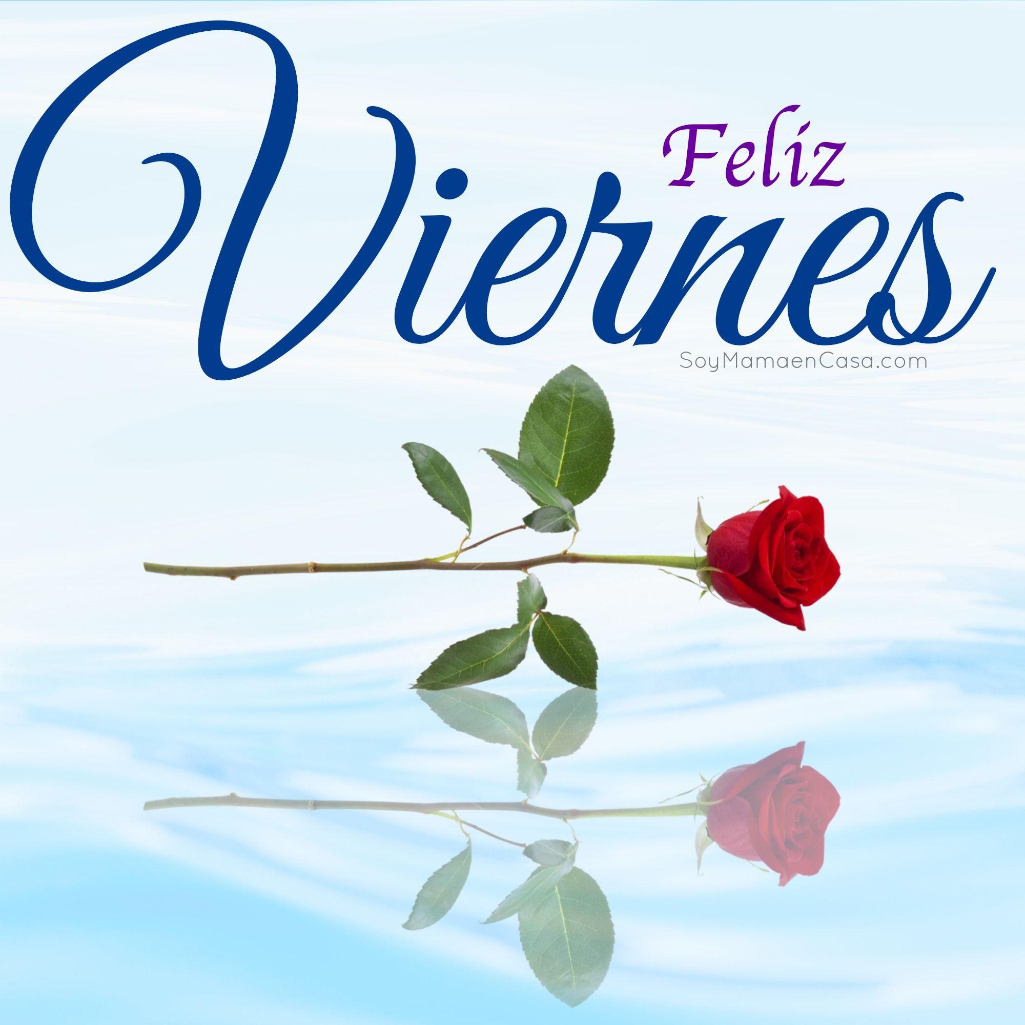Feliz Viernes Rosas Rojas Feliz Viernes Buenos Dias Feliz